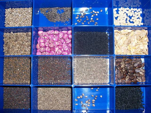 Collection of variety of vegetable and herb seeds