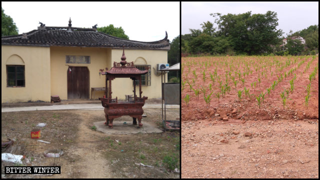 Officials ordered to plant corn in place of the demolished temple.
